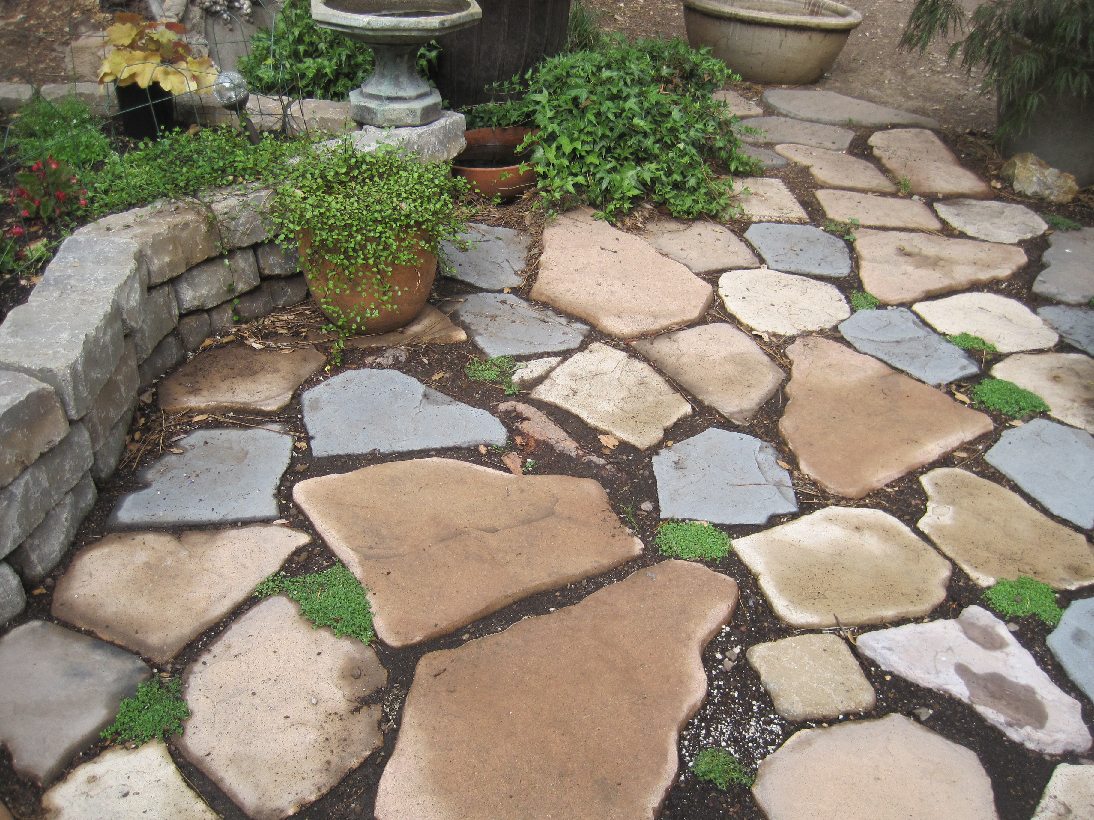 How to plant ground cover between pavers -  Ground Cover To Grow Between My Paver Stones Img_9621