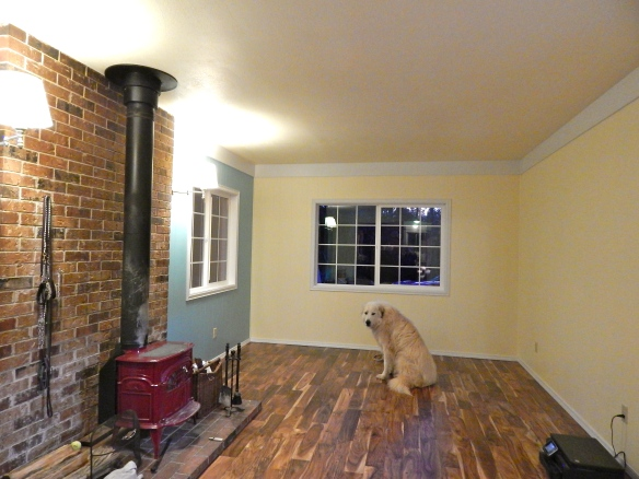 """Noah practicing his sit-stay in the """"new"""" living room."""